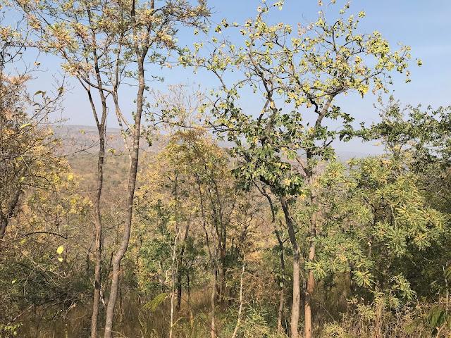 Ghat road at Srisailam