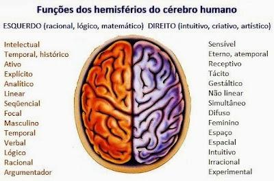 Resultado de imagem para hemisferios cerebrais