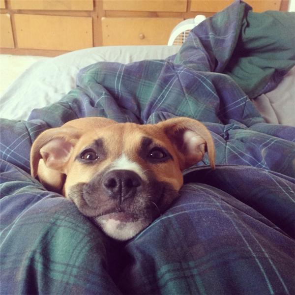 Những chú chó hạnh phúc nhất thế giới