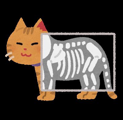 猫のレントゲン検査のイラスト