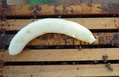 Μπανάνα για την Ασκοσφαίρωση και την καλή υγεία των μελισσιών!!!
