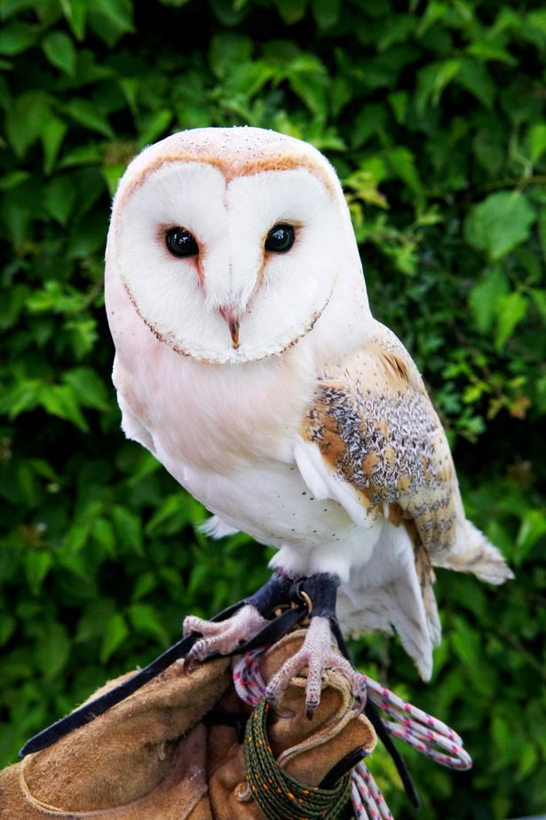 white wolf harry potter fans abandoning pet owls following end
