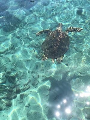 tortuga marina en agua abierta