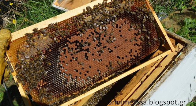 Κάτι πολύ σημαντικό για τα μελίσσια το Χειμώνα, ΠΡΙΝ μας προλάβει η Άνοιξη... Πως θα έχουμε ακόμα λιγότερες απώλειες το Χειμώνα! Μια εμπειρία επαγγελματία μελισσοκόμου