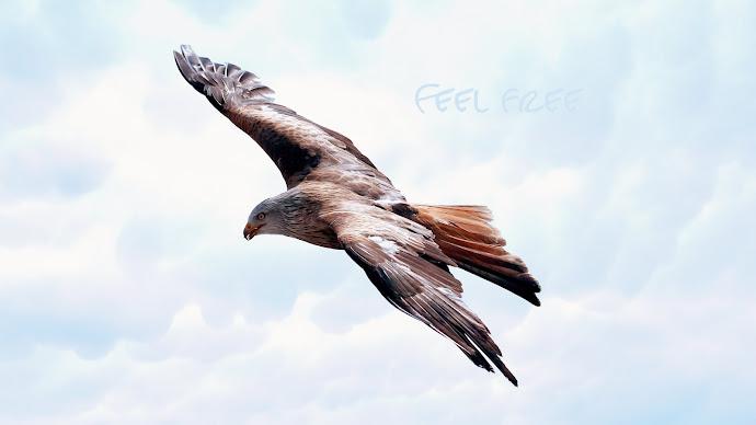 Wallpaper: Majestic Hawk