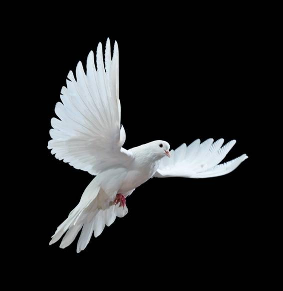 عرائس من غير البشر بثيابها البيضاء image044-784680.jpg