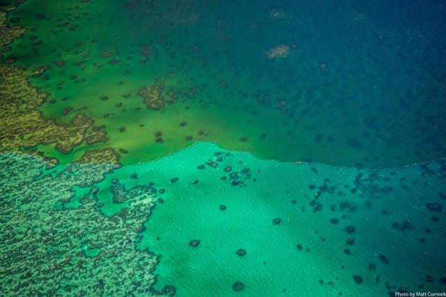 Εντοπίστηκε στην Ιταλία ο πρώτος κοραλλιογενής ύφαλος στη Μεσόγειο