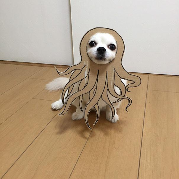 Creativos disfraces para tu mascota para esta noche de Halloween 2017