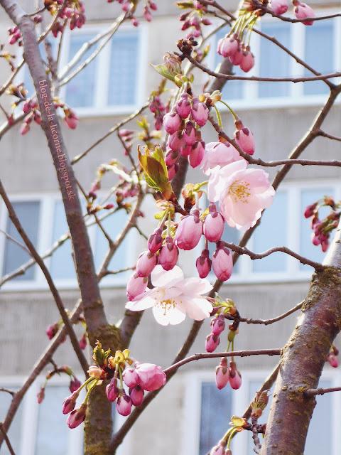 22 reasons why I simply love spring / 22 dôvodov prečo jednoducho milujem jar