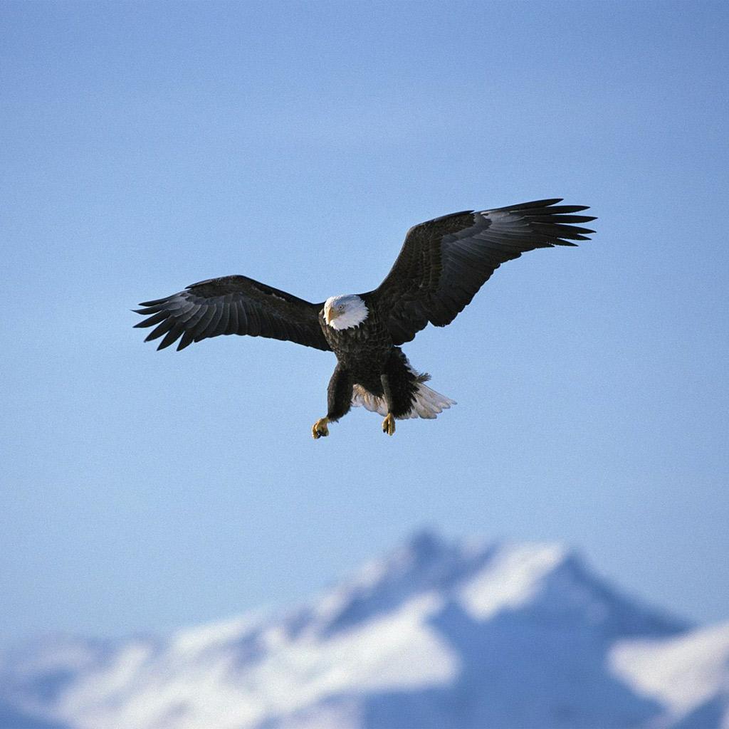 Douce Art 2: Eagle Desktop Wallpapers