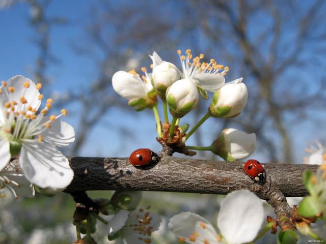 Весенние приметы и суеверия, Крестьянские поговорки о весне, Приметы весны о лете, весна, весенние приметы, приметы и суеверия, приметы о весне, приметы народные, мудрость народная, приметы весны о лете, поверья народные, календарь народный, снег весной, погода весной, про весну, про весенние месяцы, про календарь, про апрель, про май, про март, март, апрель, май, приметы на март, приметы на апрель, приметы на май, приметы народные, календарь народный, календарь примет, http://prazdnichnymir.ru/,Весенние приметы и суеверия, Крестьянские поговорки о весне, Приметы весны о лете, весна, весенние приметы, приметы и суеверия, приметы о весне, приметы народные, мудрость народная, приметы весны о лете, поверья народные, календарь народный, снег весной, погода весной, про весну, про весенние месяцы, про календарь, про апрель, про май, про март, март, апрель, май, приметы на март, приметы на апрель, приметы на май, приметы народные, календарь народный, календарь примет, http://prazdnichnymir.ru/,Весенний народный календарь,, народный календарь примет и традиций, весенний календарь, весенний народный календарь, весенние славянские праздники, про весну, весеннее, календарное, народные приметы и суеверия, приметы о природе, приметы о погоде, славянские верования, славянские традиции, наблюдения за природой, наблюдения за погодой, народный календарь на 2020 год, народный календарь на 2021 год, календарь народных праздников на каждый день, народный календарь славян, народный календарь на весну, календарь народных примет, приметы весны, приметы марта, приметы апреля, приметы мая, приметы на март народные, приметы народные на апрель, приметы народные на май,Весенний народный календарь,