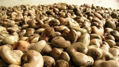 Mengerikan!! Inilah Makanan Paling Berbahaya Yang Pernah Di Temui Di Dunia