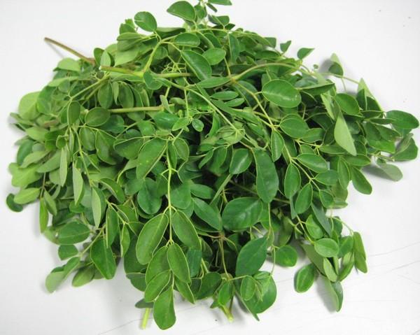 Phương pháp trồng cây chùm ngây