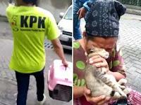 Tim Berbaju KPK Evakuasi Kucing dari Ibu Pengemis Ini, Selanjutnya Bikin Netizen Menangis