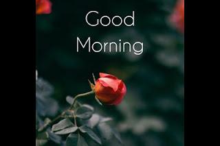 Every New Day-Good Morning SMS (ChhondoMela)