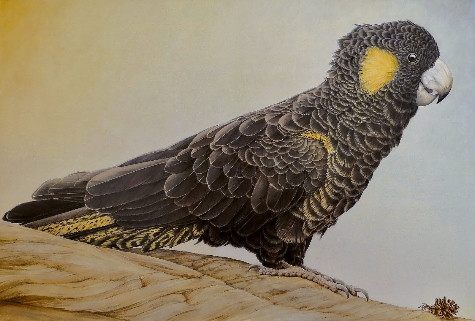 Yellow Tailed Black Cockatoo 2019 by Janet Luxton.