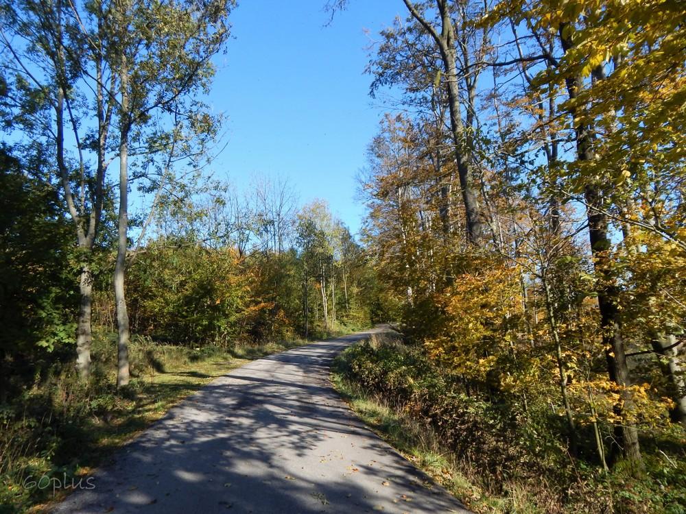 Prechádzka v jesennom lese