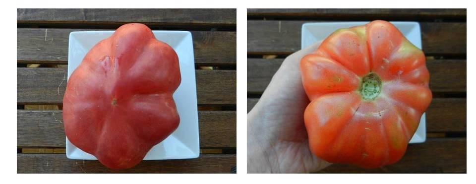 tomate pera rosa