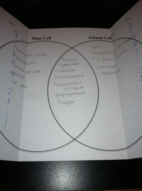 plant animal cell venn diagram garmin gps antenna wiring bookish ways in math and science: unit resource portfolio: living systems