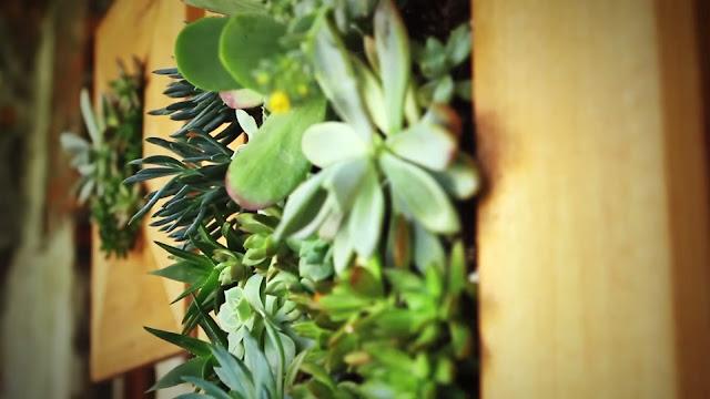 suculentas en jardín vertical.