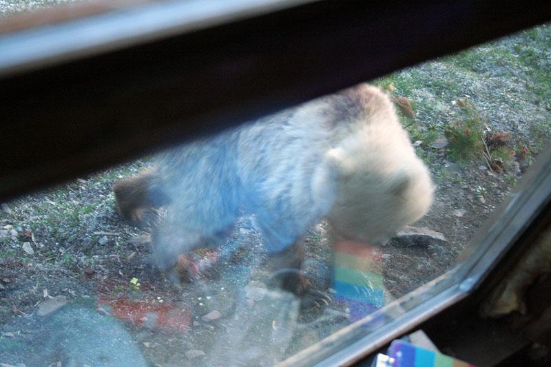 медведь-эссо-камчатка