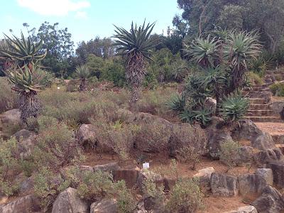 Kirstenbosch, botanic garden, nature, palm trees, nature photography