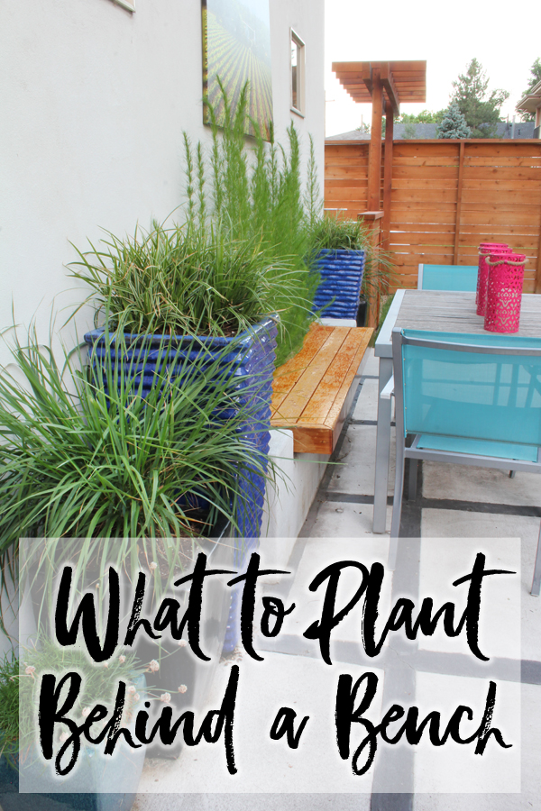 WHAT TO PLANT BEHIND A GARDEN BENCH. When we added a planter bench in our backyard, we had a hard time finding a plant that would grow tall and straight, but be soft against our backs. We finally found the perfect plant for our garden bench!