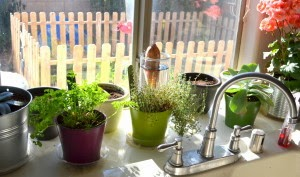 http://blackthumbgardener.com/1-plants-you-grow-from-kitchen-scraps/