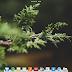 Mencicipi Mewahnya Elementary OS 0.4.0 Loki