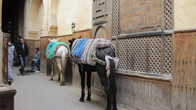 Mulas para el transporte en el interior de la medina de Fez