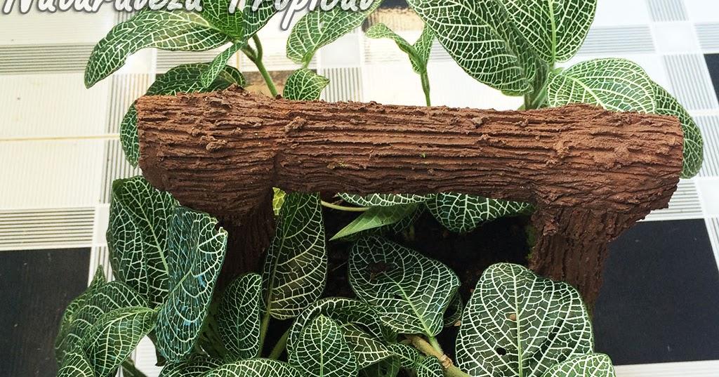 Naturaleza tropical las fitonias plantas de interior por for 20 plantas ornamentales