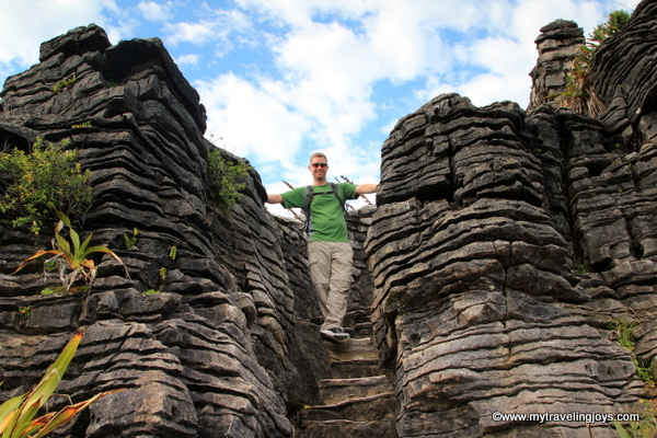 What the heck are pancake rocks in new zealand my traveling joys the park and surrounding cool climate rainforest area is populated by the tall niaku palm nzs only native palm tree ccuart Image collections