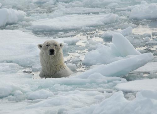 Polar Bear 42 D 25 HotWhopper