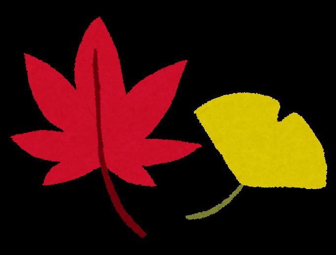 紅葉のイラスト赤いもみじと黄色いイチョウ かわいいフリー素材集