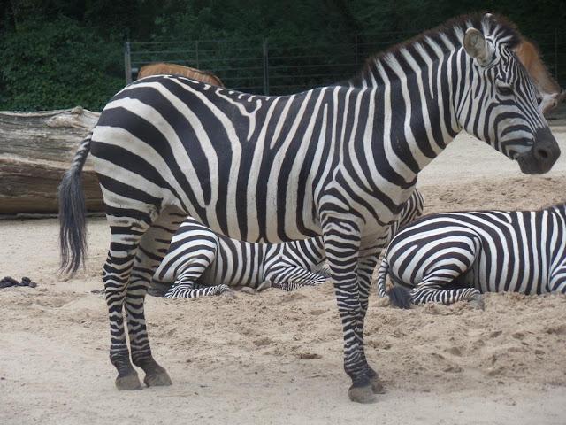 Zoo w Berlinie