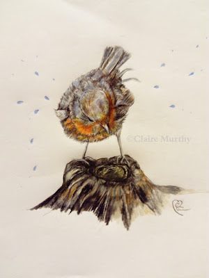 robin color pencils illustration polychromos