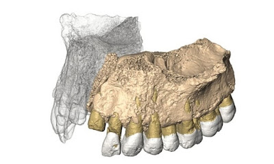 Fosil Manusia Tertua di Luar Afrika Telah Ditemukan