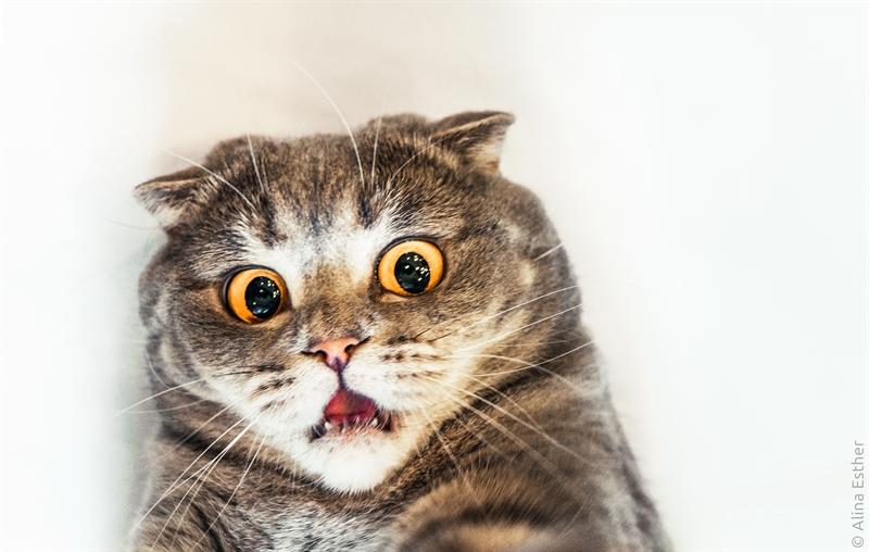 Kumpulan Cara Melatih Kucing Agar Nurut,Pintar dan Jinak