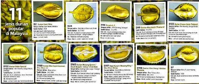Durian yang Popular Di Malaysia - Jabatan Pertanian Pahang