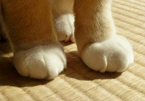 Mèo gập chân 90 độ
