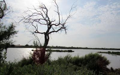 Lagunas de la Camarga