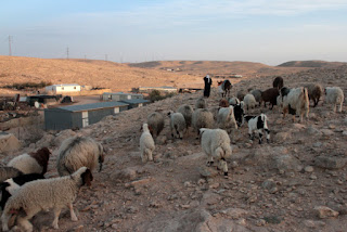 Sheep herd in a Bedouin village in the Negev