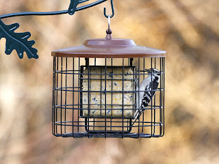 Squirrel proof suet bird feeder