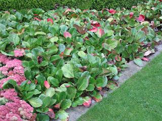 Tanaman Hias Untuk Taman Minimalis Tukang Taman