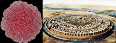 Biofilm de Pseudomonas aeruginosa comparado con la ciudad redonda de Baghdad