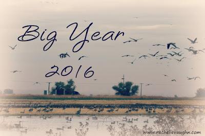 birding big year