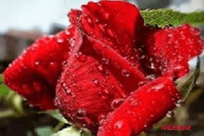 Kumpulan puisi cinta romantis bertema kasmaran