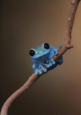 Simpatica imagen de rana azul sonriente