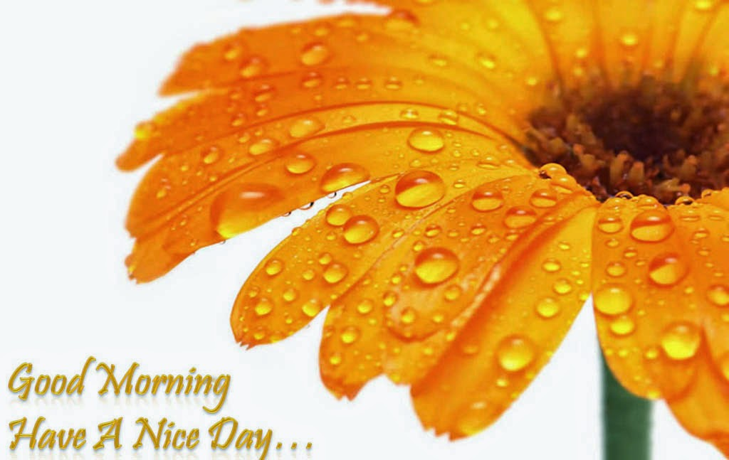 Good Morning Have A Nice Day Wallpapers | Download Free High Definition Desktop Backgrounds