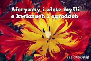 aforyzmy o kwiatach